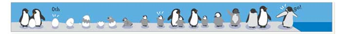 ペンギンの一生をストーリーにしてみたW